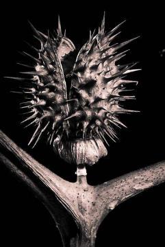 exposition-natures-mortes-et-plantes-mortelles